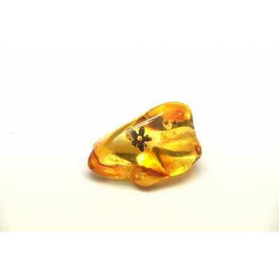 Baltic amber stone with rare insect of flower