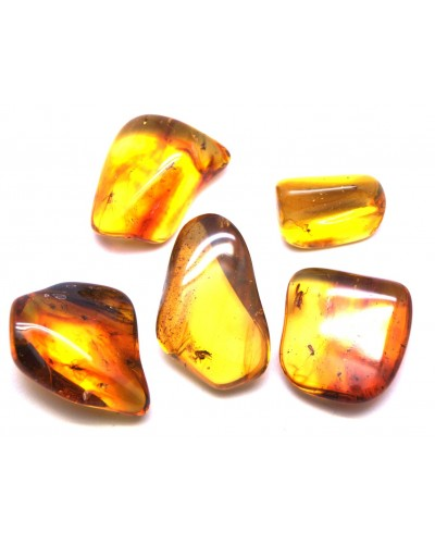 Lot of 5 Baltic amber pieces with insects