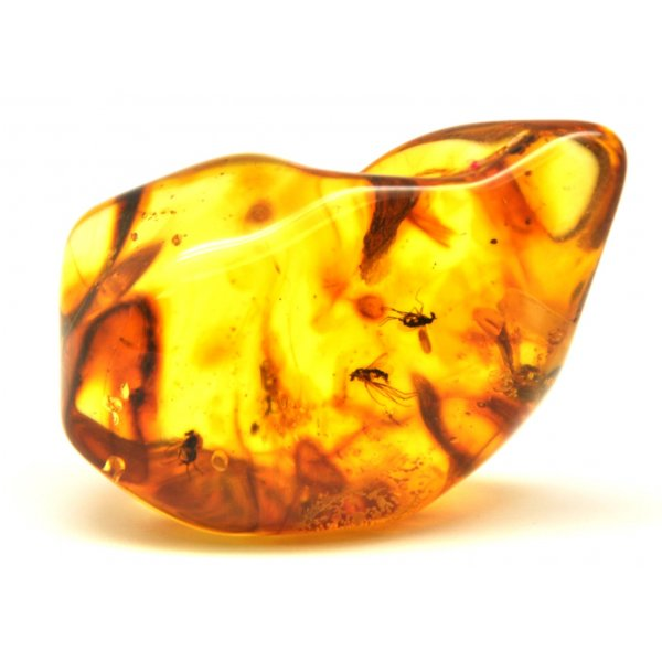 Baltic amber stone with insects -AI0486