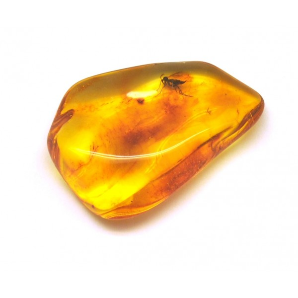 Amber with insects | Baltic amber stone with insects 11 g.