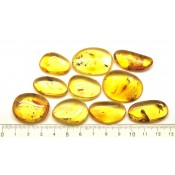 Lot of 10 Baltic amber pieces with insects