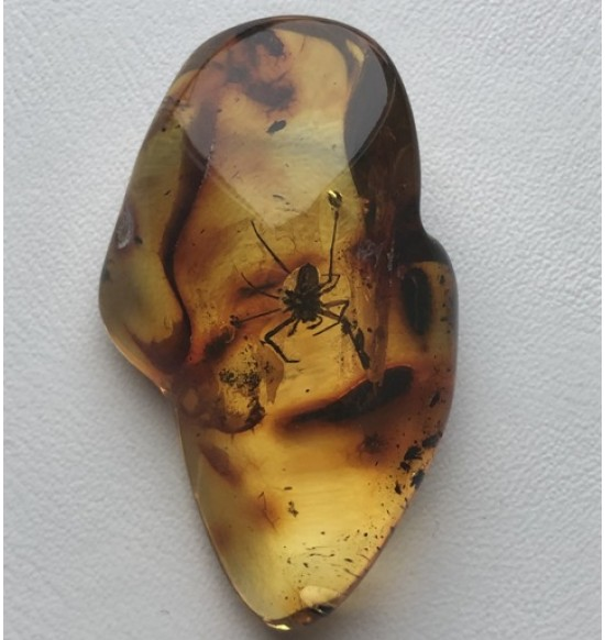 Amber stone with insec t