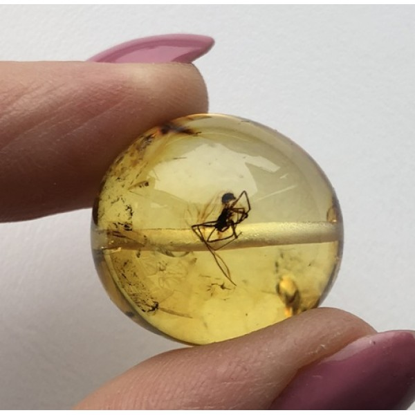 Drilled amber bead with insect-AI0862
