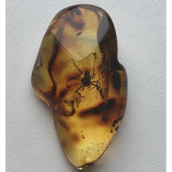 Amber stone with insect-AI0888
