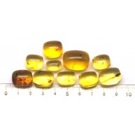 Lot of 10 Baltic amber barrel shape pieces with insects