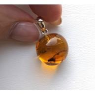 Natural Baltic Amber Pendant With Insect