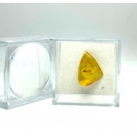 Small Baltic Amber piece with insect in transparent plastic box