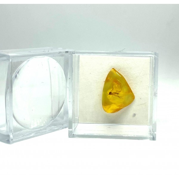 Small Baltic Amber piece with insect in transparent plastic box -
