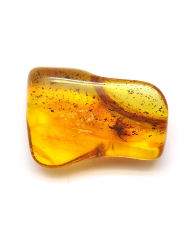 Baltic amber piece with insect