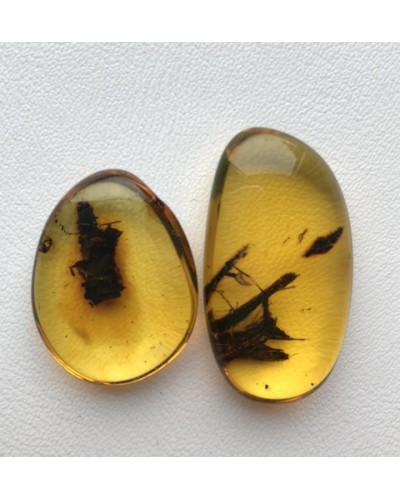 Two amber stones with plants