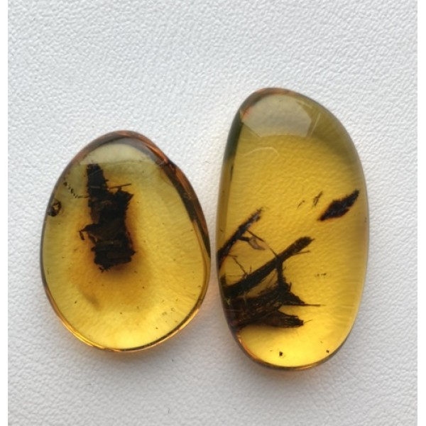 Amber with insects | Two amber stones with plants