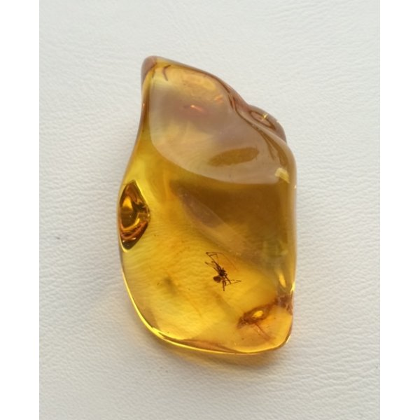 Baltic amber stone with spider-AI0830